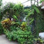 Photo of Mrs Padmini Nanayakkara's Chelsea Gardens