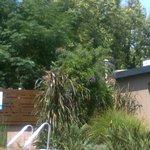 Jardín alrededor de la piscina