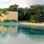 Dolphins swimming in pools wasn't our idea of a natural experience