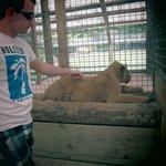 Lion Cub Petting