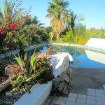 Vegetation around pool