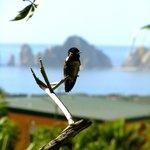 Hummingbird enhancing the view