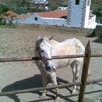 White horse on the upper terrace