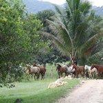 Fresh Horses