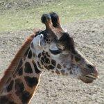 Giraffe to take my photo?