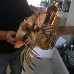 Fresh local seafood from local supplier, so big!!