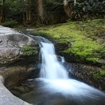 The small waterfall before liffey fall