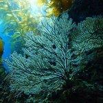 Foto de Dive Catalina
