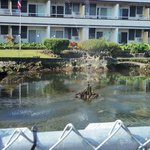 koi pond in front of the hotel