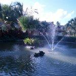 Fountain behind Amaya Restaurant