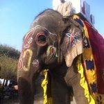 Auch der schön geschmückte Elefant, die Kamele und Tanzpferde haben nicht gefehlt