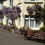 Wisteria along the hotel