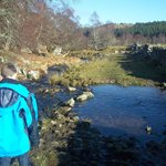 Stepping Stones on the red squirrel walk