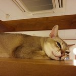 猫の部屋もあります。