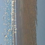 Migratory birds on the beach in the morning