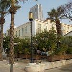 Palms in Suzanne Dellal square 1