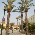 Palms in Suzanne Dellal square