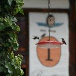 Birding reception at San Jorge Quito