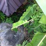 giardino trascurato pieno di insetti e zanzare