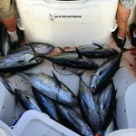 Offers offshore fishing for Yellowtail, Tuna, and Dorado!