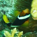 Nemo gefunden