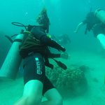 Under water with Scott and fellow divers.