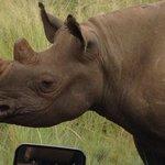 Close encounter with a rhino!