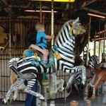 Carousel Zebra at Lowry Park Zoo