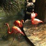 Flamingo Habitat at Lowry Park Zoo