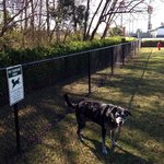 Awesome fenced in pet exercise area Tallulah enjoying some off leash time !