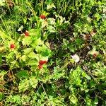 Wild Berry Picking!