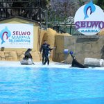 The seals playing with a ball