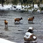 More wild life, elk