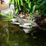 Reptile seen in the garden