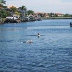 Les dauphins jouaient autour du bateau