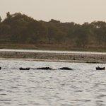 Mare aux Hippopotames