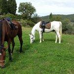 Il prato e la vista davanti al Nuovo Ranch
