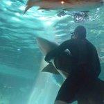 Nado con tiburones