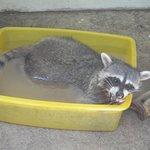 un amigo tomandose un baño