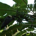 Wunderschoene Pflanzenwelt auf dem Hotelgelaende