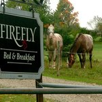 Welcome to Firefly B&B