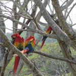 MaCaw Preserve on site