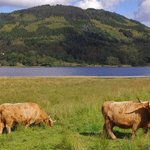 Hotel Cattle and Loch view