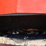 So may seafood/fish options...on hot coals....delicious!