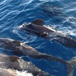 balene delle Canarie