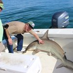 """""""Don't let the shark on the boat,"""" Captain Mike says..."""