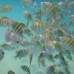 Surrounded by fish at Yal-Ku Lagoon