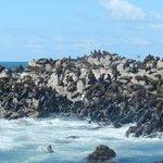 Dayer Island