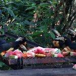 Birds at bar