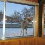 the scene outside the restaurant window